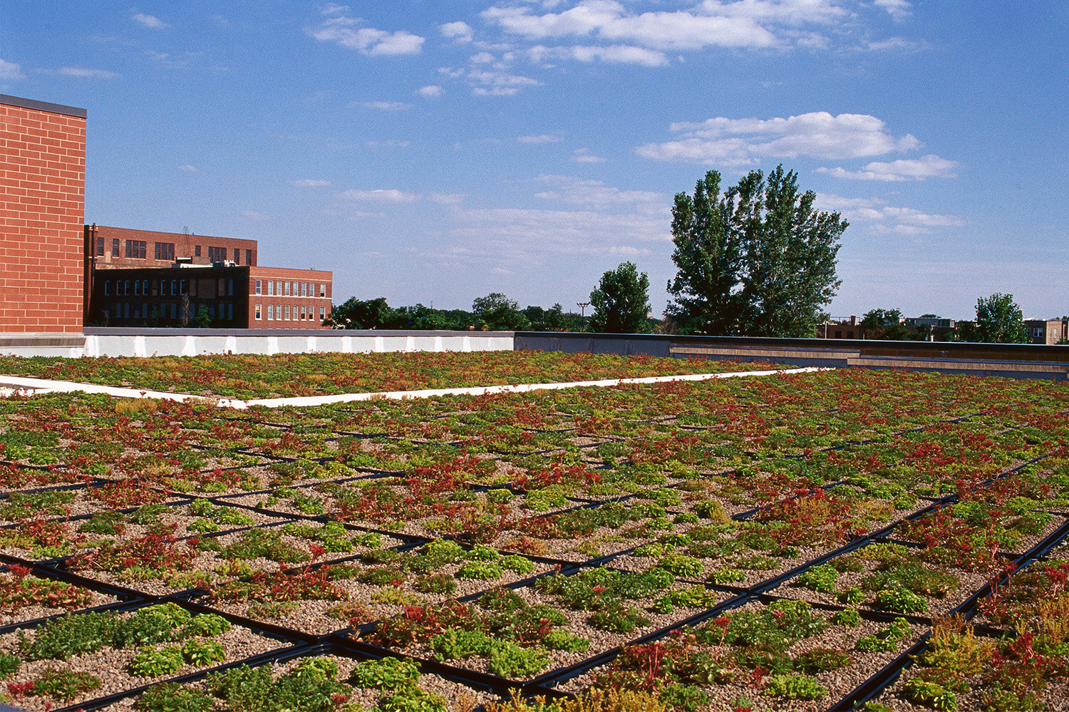 Holy Family Lutheran School rooftop garden